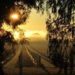 Chalmers Wines Sunrise over Vines