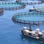 Things you need to know about Farmed Fish
